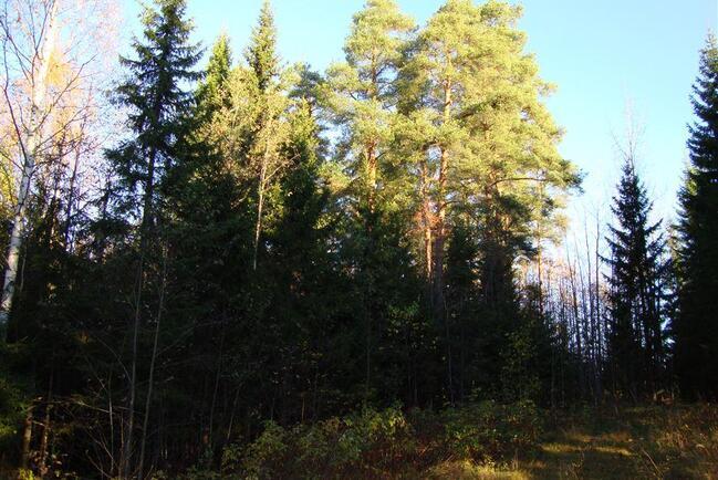 avoin yhtiö Kuopio