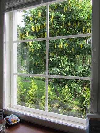 kesänäkymä keittiön ikkunasta