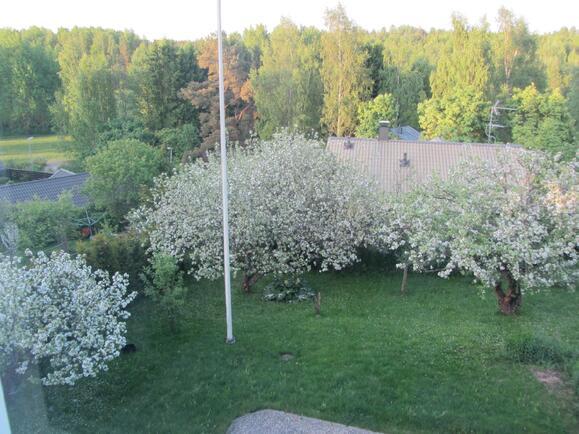 kesänäkymä yläkerran ikkunasta