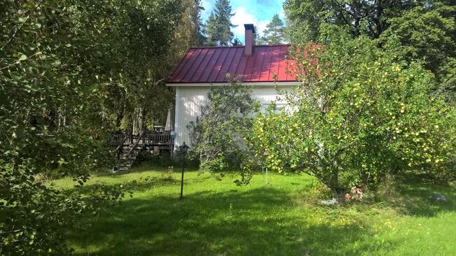 Eteläseina sekä omena- ja kriikunapuita. Vasemma...