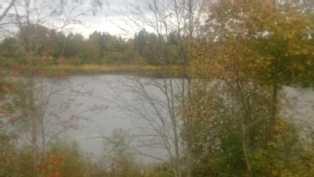 Kuvajoen suuntaan, joki muodostaa järvialtaan Kolsin alapuolella