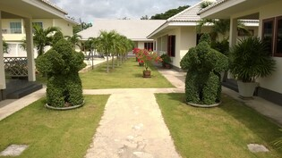 Alueen puutarha