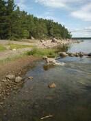 Kävelymatkan päässä olevaa Äijänniemen rantaa riittää myös koirille
