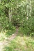 Polku järvelle ja luontopolulle lähtee ihan tontin kulmalta