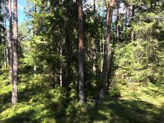 Metsätontti-skogstomten