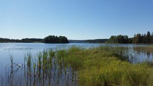 Ilveslahti, Leppävesi