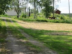 Hevoset naapurin puolella