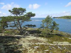 Näkymä rantapalstalta länteen Selkämerelle