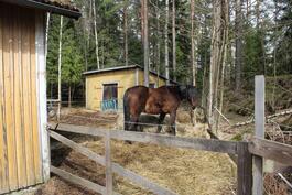 Hevosten pihatto