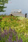 Piha-alueella on runsaasti kauniita koristekasveja