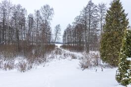 Talvinäkymä järven suuntaan