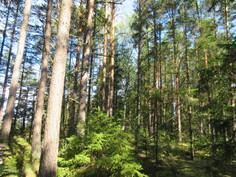 Omalla komealla n. 2,6 ha saarikiinteistöllä on myös runsas mäntypuusto, josta saa myös polttopuut kätevästi omasta takaa!
