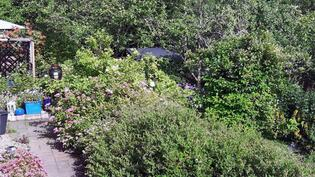 pihapolku oleskeluterassille