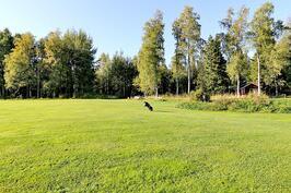 Golf kenttä alueella