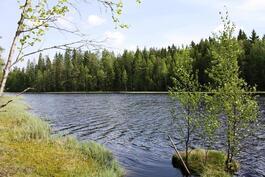 Savijärven rannalta
