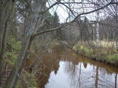 Pattijoki virtaa tontin rajalla