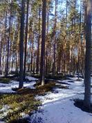 Uudistuskypsää metsää kuviolla 128
