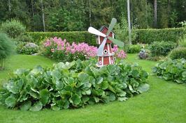 Tuulimylly ja puutarhaa