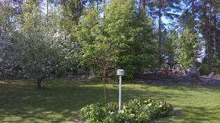 takapihalla omenapuut kukkii toukoussa 2016