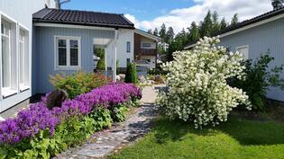 Kukkivaa puutarhaa