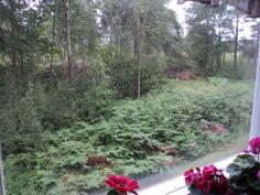 Keittiön ikkunasta näkymää luonnon maisemiin.