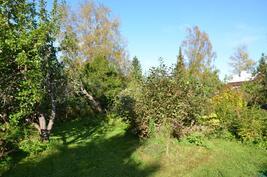 Vehreä piha hedelmäpuineen ja marjapensaineen