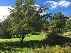 Vehreä sisäpiha / Grönskande innergård