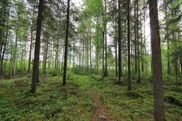 Kaunis metsäinen polku rantaan