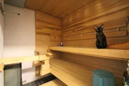 Kissa kirnauskis kutsuu löylyihin..on muuten puulämmitteinen kiuas :)