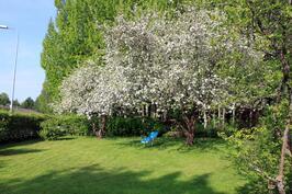 omenapuut kukkii, se tietää omenia myöhemmin