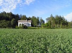 peltoaluetta