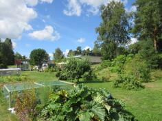 Omalla hoidetulla n. 2000 m2 puutarhatontilla on myös runsas ja satoisa hyötypuutarha!