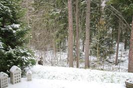 Lyhdyt tuikkimaan, talvinen metsä.