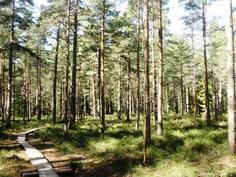 Jollaksen luonnonsuojelualue ja pitkospuut