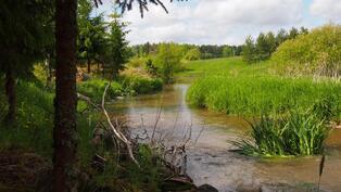 Terttilänjoki tontin rajalta