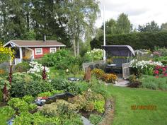 Kukkaloistetta puutarhassa