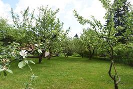 kaunis puutarha