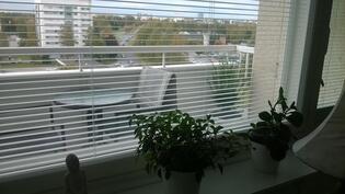 Ikkunat uusittu