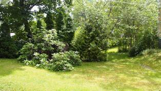 puutarhaa