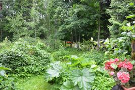 Puutarhassa marjapensaita, raparperi, perennoja jne.