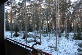 Lasitettu parveke - näkymät läheiseen metsään