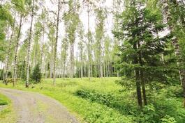 Metsäalue