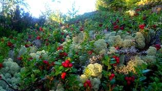Kiinteistön lähistöllä on myös hyvät marjastus- ja sienestysmaastot sekä ...