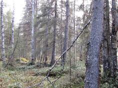 Vaihtelevaa metsää kuviolta 740 talvitien läheltä