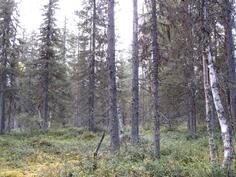 Nuorta metsää kuvion 740 keskiosassa