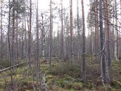 Nuorta metsää kuviolta 728