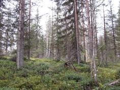 Nuorta metsää kuviolta 733