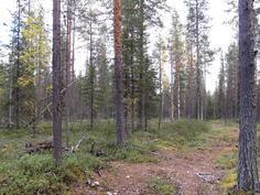 Talvitietä ja varttunutta metsää kuviolta 735