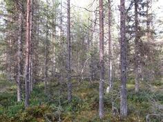 Nuorta metsää kuviolta 741