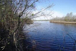 Ivalojoen palstan rantaa Sahanperältä